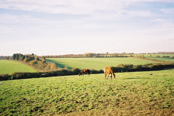 Horses and downland