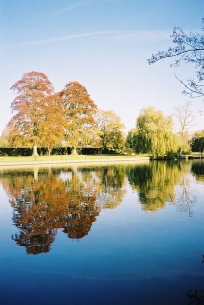 River Thames - beeches and willow reflected