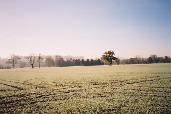 Frosty Farmland, Temple Park