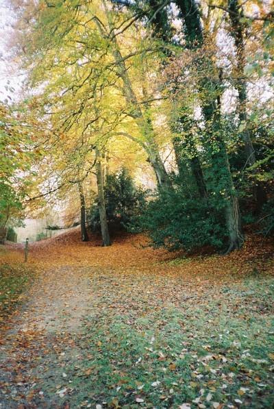 Fultness Wood