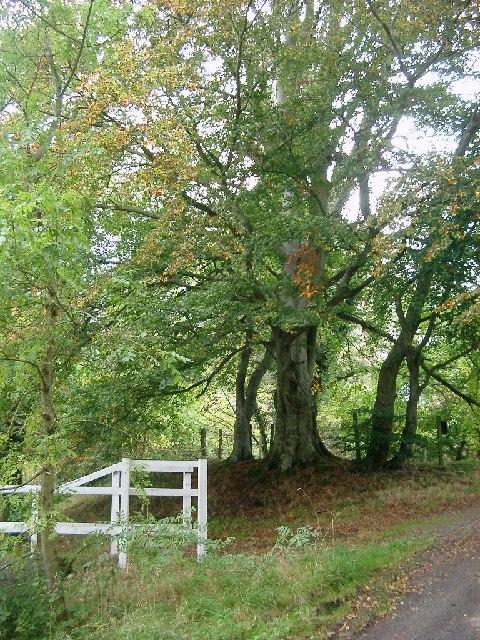 Trees near Costerton