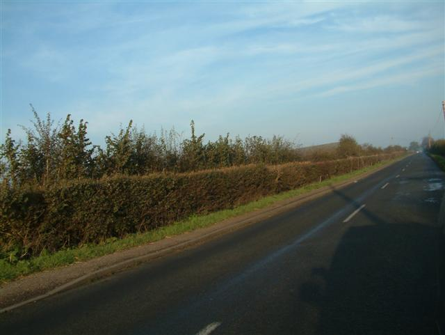 The road to Wallingford from Cholsey