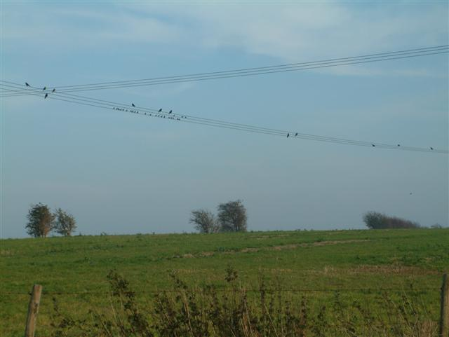 Birds on the Line over the footpath to Cholsey