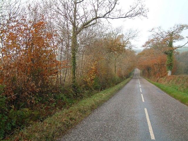 Wooded lane near Nutcombe Farm