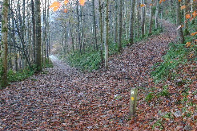 Southern Upland Way near Yair