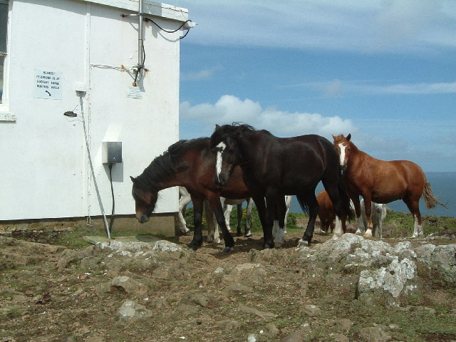Horses at Coastguard lookout station, Martin's Haven