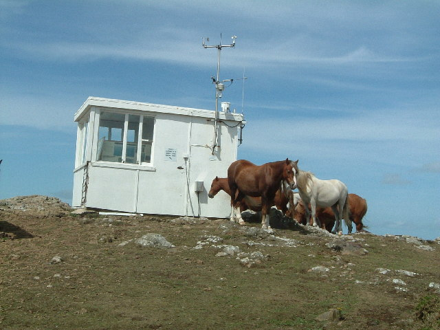 Coastguard Lookout, Martin's Haven with horses