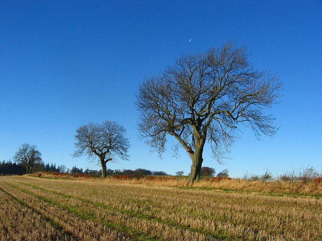 Hedgerow, Peaston Farm.