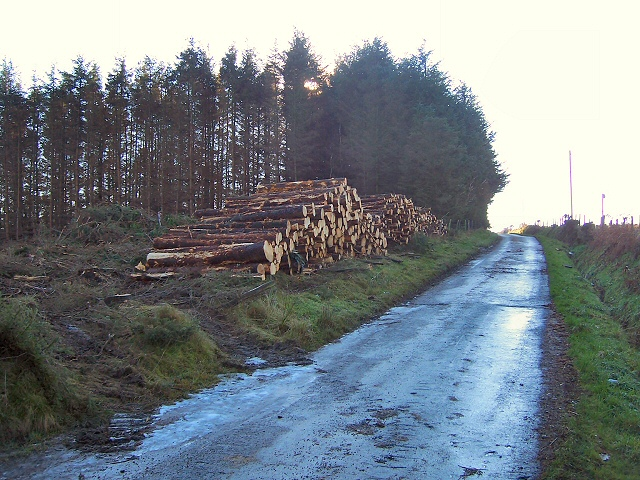 Logging at Rhiwiau