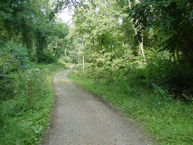 Woodland Track near Penrice