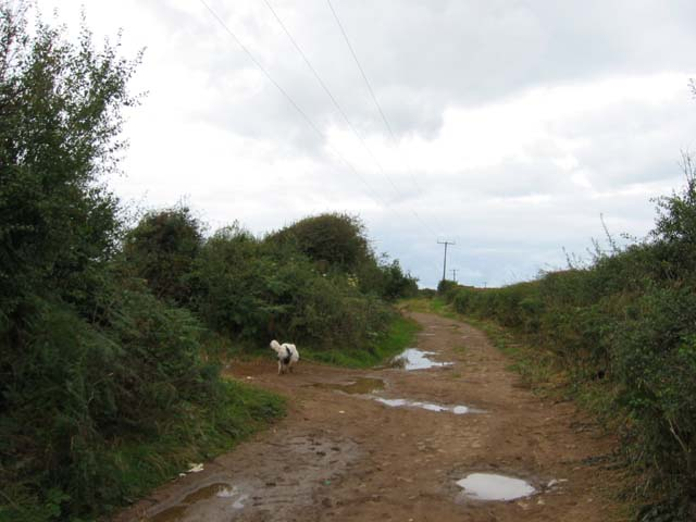 Country lane, near Scurlage, Gower
