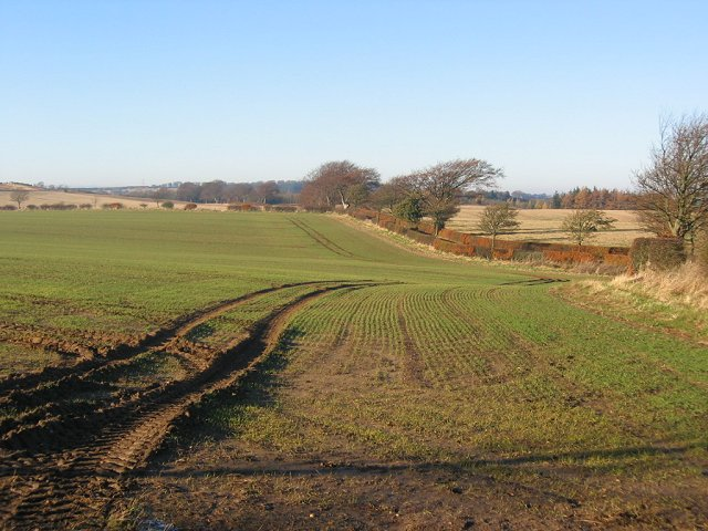 Fields, Upper Keith.