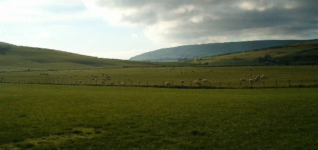 Sheep Grazing in Glen Breackerie