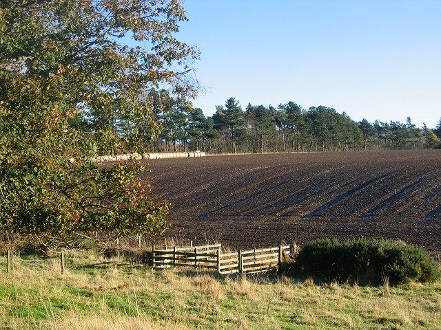 Ploughed field, Leaston.