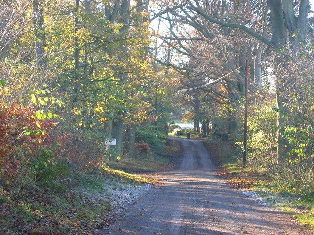Woods, Stobshiel .