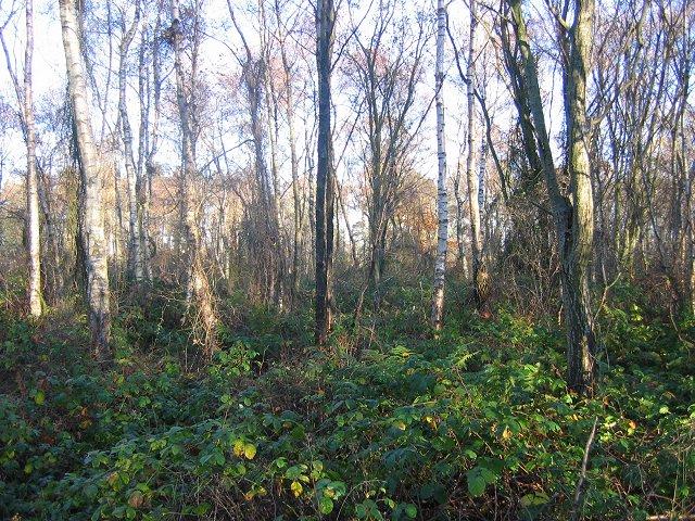 Petersmuir Wood.