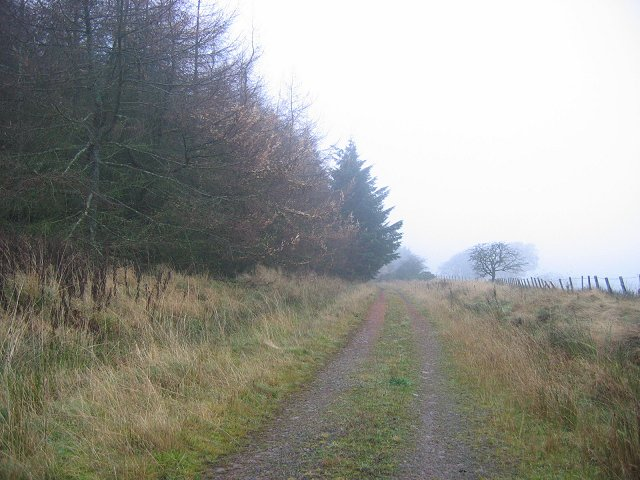 Eddleston - Noblehouse road in Grassfield Forest.
