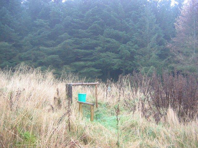 Pheasant feeder, Grassfield Forest.