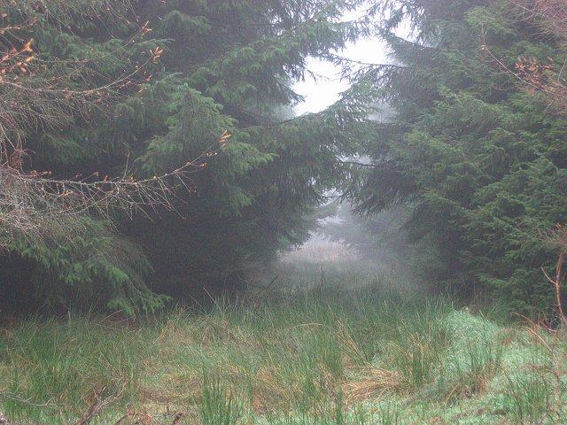 Grassfield Forest.