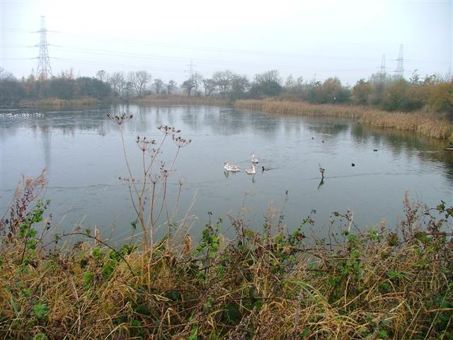 The Lake, Cowpen Bewley Woodland Country Park