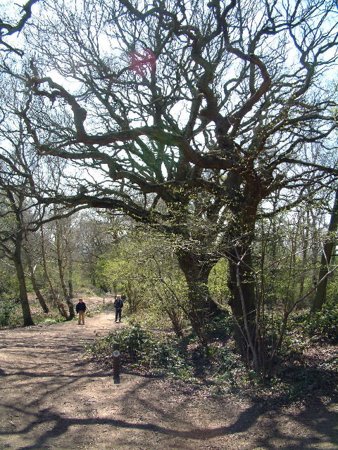 Shotover Country Park, Oxford
