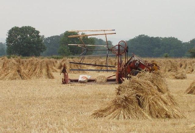 Harvest at Chirton