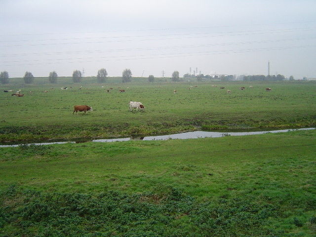 Moreton's Leam (Drain) and pasture