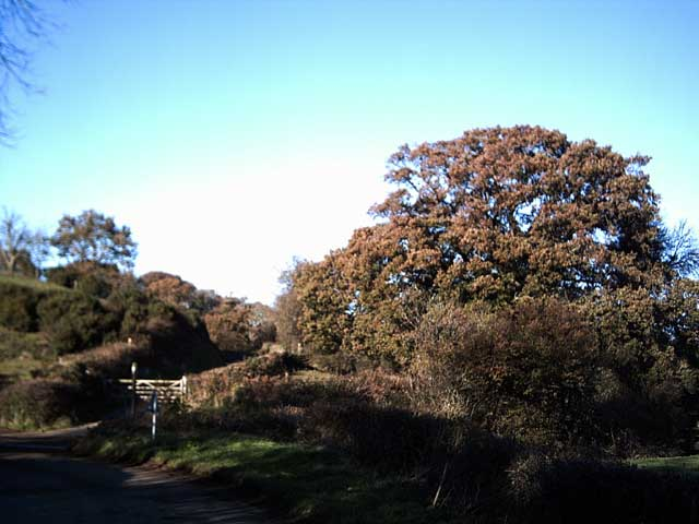 Tarka Trail near Bridge Farm