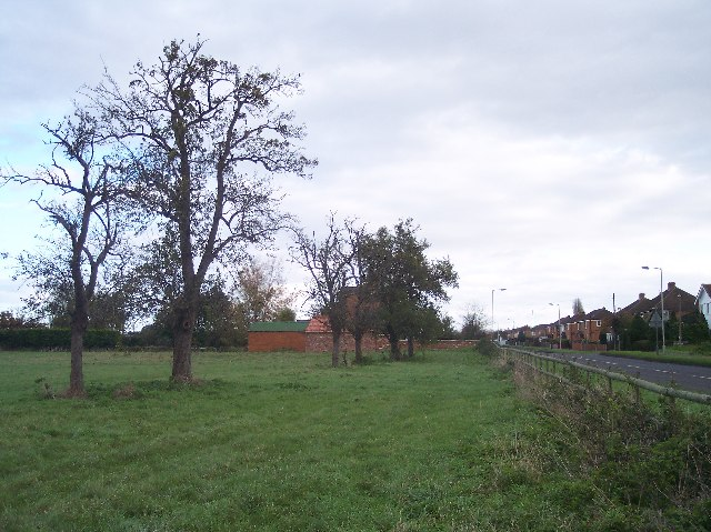 Old Perry Orchard