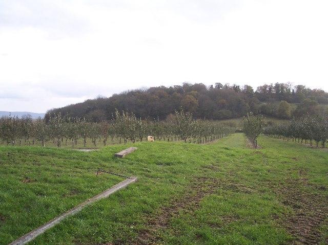 Orchard, Ashleworth