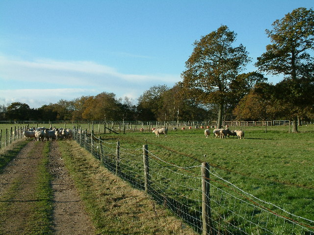 Battramsley farm field and track, New Forest
