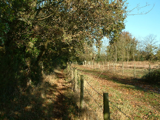 Footpath near Sway Road, New Forest