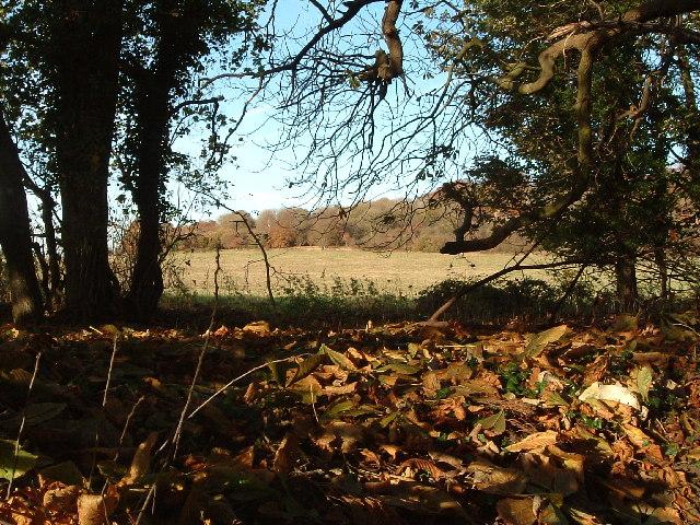 View across fields from footpath off Northfield Road