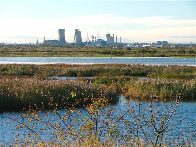 Bird Reserve, Saltholme Marshes
