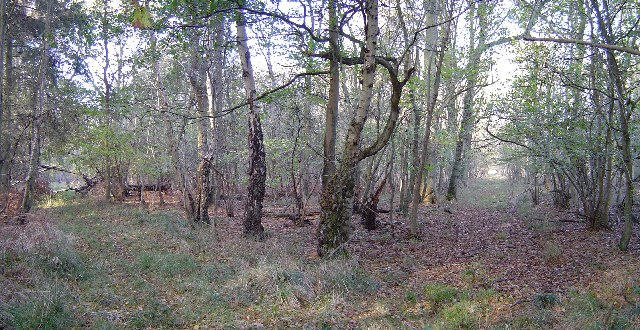 Collyweston Great Wood
