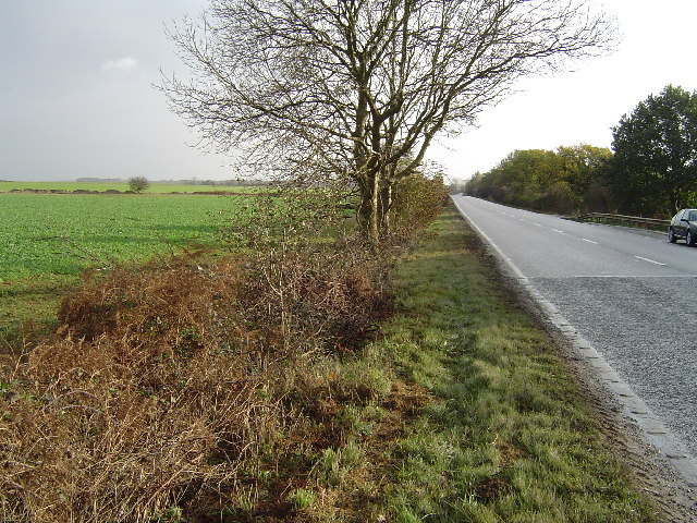 A47(T), near Wittering Lodge
