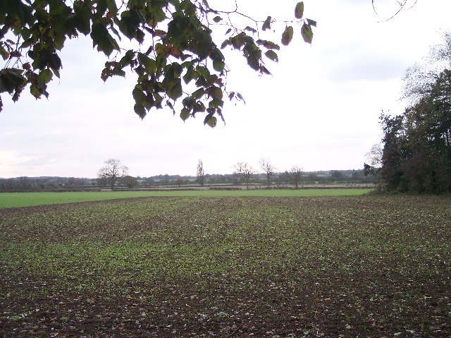Newly Planted Fields, Phepson