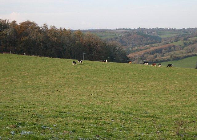 Pasture land on the edge of Blaxton Wood