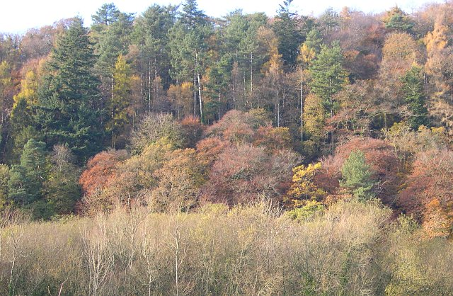 Late Autumn Colour, Whittacliffe Wood