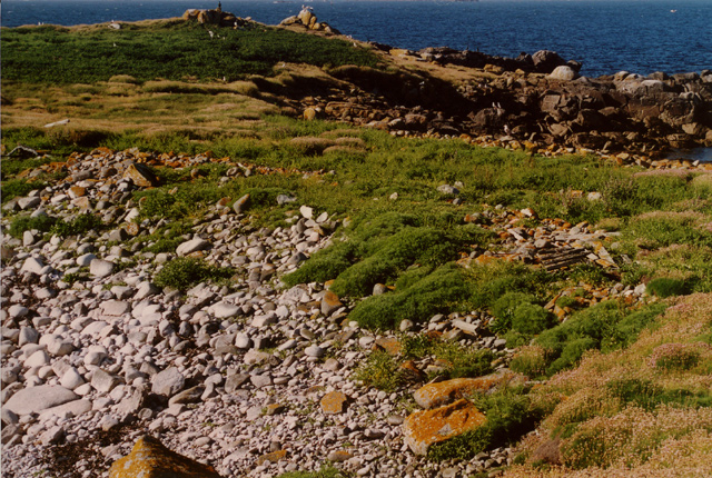 Looking NNE across the narrowest part of Annet, Isles of Scilly