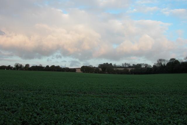 Looking across farmland at Wick Farm, near Finchdean.