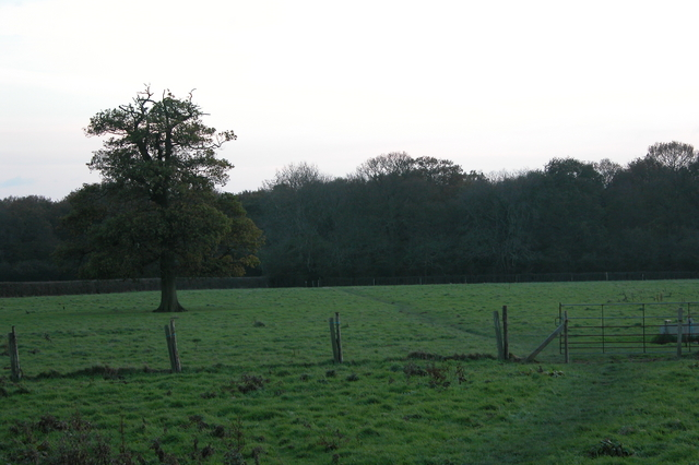 Looking towards Stansted Forest, from Forestside