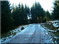 NM9701 : Icy Forest Road by Patrick Mackie