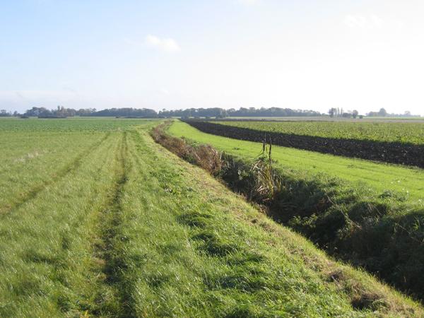 Farmland E of the Northolm, Eye Green, Peterborough