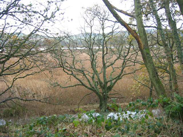 Reed beds and woodland