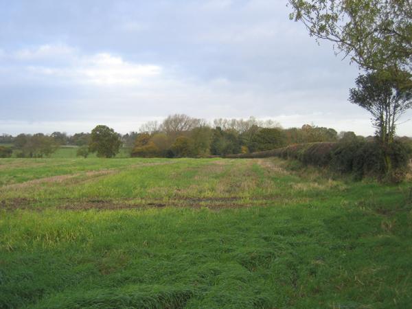 Farmland view towards Stoke Golding, Leics