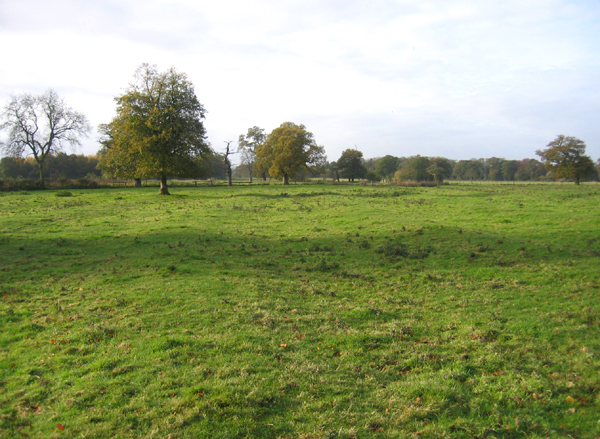 Ridge and furrow, Shenton, Leics