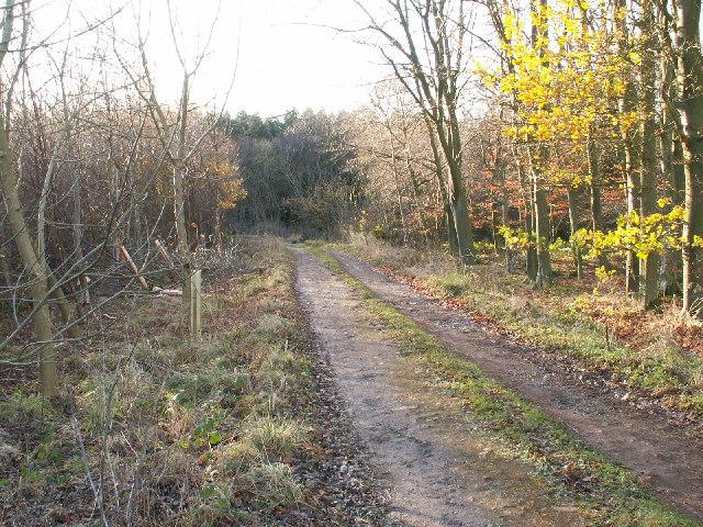 Woodland road in Redwells wood
