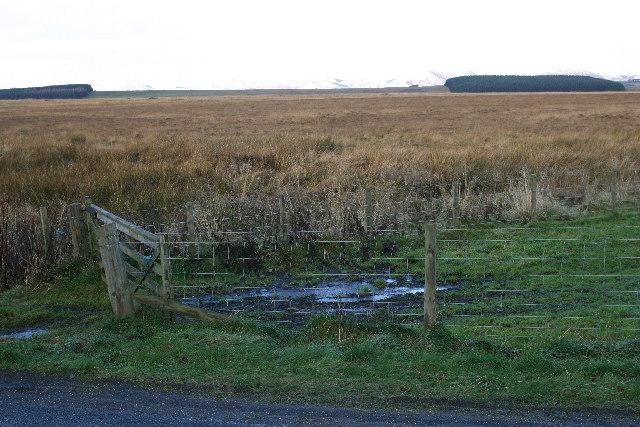 Scrubby land