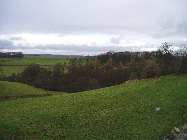 Woodland on the edge of Slaidburn